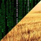 Matrix w sieci