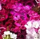 dzień kobiet kwiaty